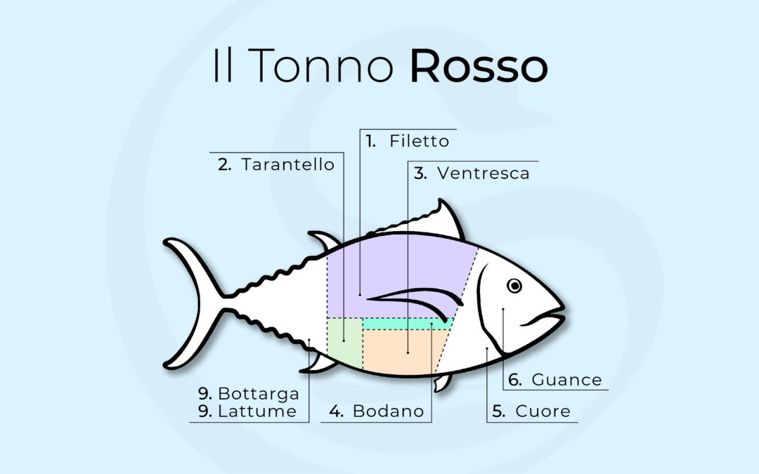 Quali sono le parti del tonno? Conoscerne i tagli per usare in cucina il maiale del mare davvero al meglio