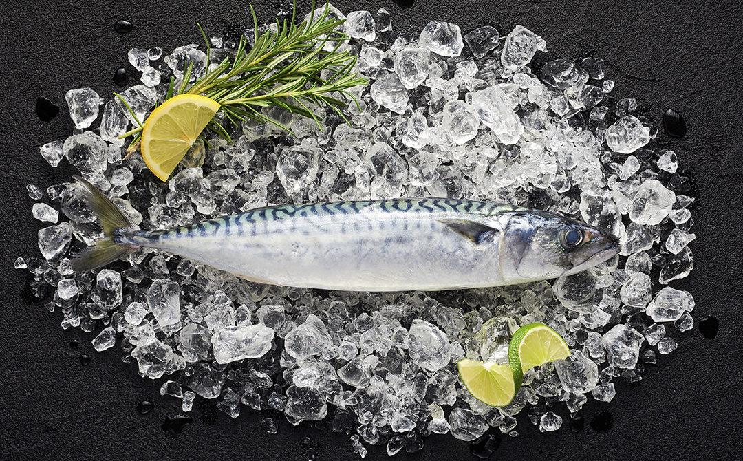 Come cucinare lo sgombro e quando scegliere tra pesce fresco e sott'olio? Ecco 3 ricette (e qualche consiglio dal nostro chef)