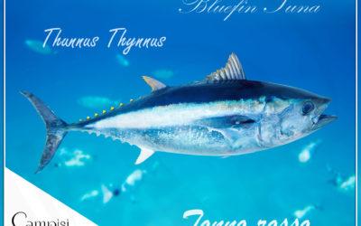 Ventresca di tonno: tre semplici ricette per una cena di pesce veloce e gustosa